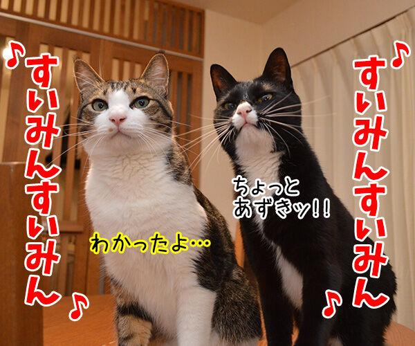 すいみん不足 猫の写真で4コマ漫画 3コマ目ッ