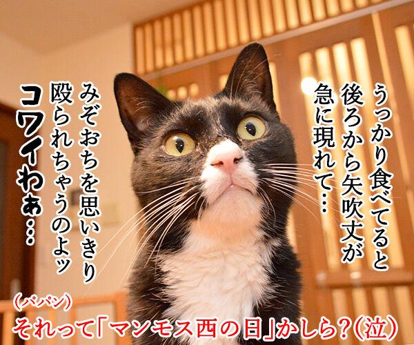2月4日は『西の日』なんですってッ 猫の写真で4コマ漫画 4コマ目ッ