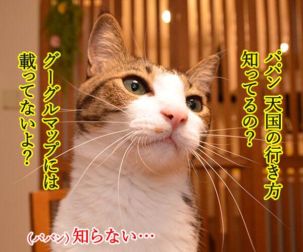 パパンが天国に行ったら 猫の写真で4コマ漫画 2コマ目ッ