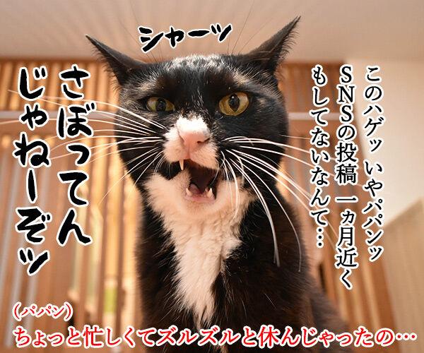 心配してくれている方へ 猫の写真で4コマ漫画 1コマ目ッ