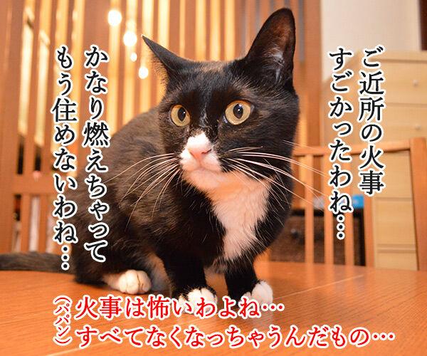 地震 雷 火事 親父 猫の写真で4コマ漫画 1コマ目ッ