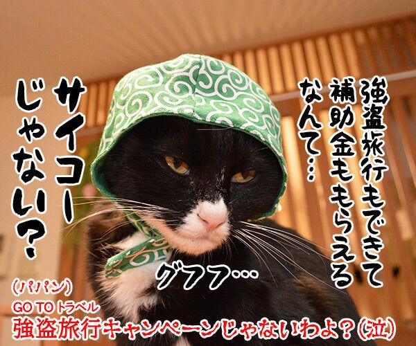 GO TO トラベルキャンペーンが始まったのよッ 猫の写真で4コマ漫画 4コマ目ッ