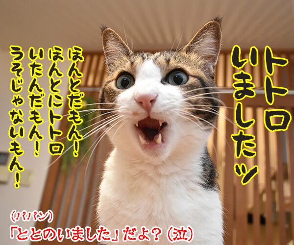 なぞかけやってみなさいよッ 猫の写真で4コマ漫画 4コマ目ッ