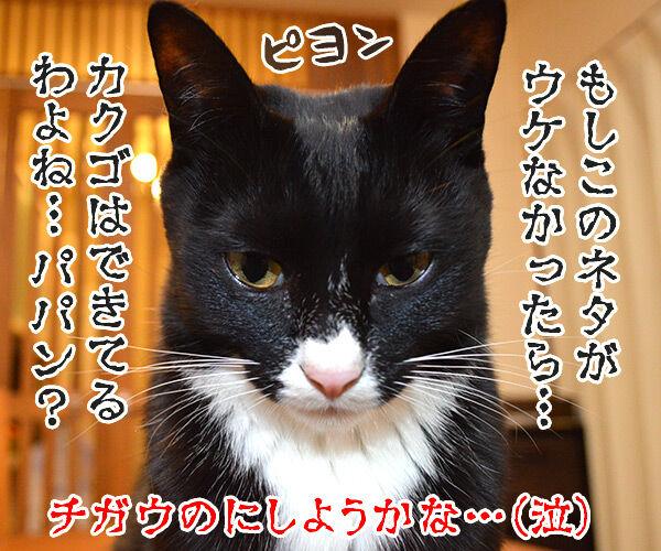 宴会芸 猫の写真で4コマ漫画 4コマ目ッ
