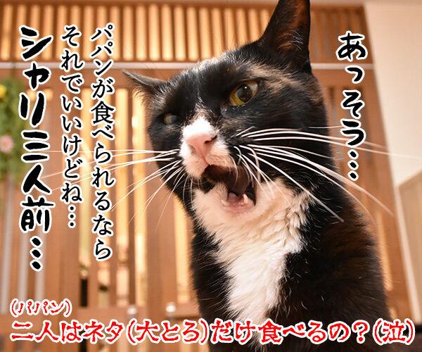 スシローで『大とろ祭』が開催中なのよッ 猫の写真で4コマ漫画 4コマ目ッ