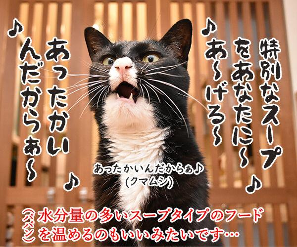 猫さんは寒くてお水飲まないと下部尿路疾患になっちゃうのよッ 猫の写真で4コマ漫画 4コマ目ッ