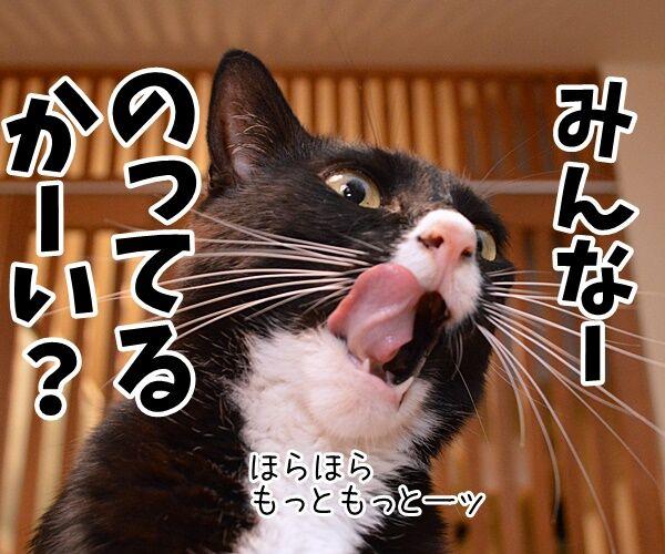 みんなー のってるかーい? 猫の写真で4コマ漫画 3コマ目ッ