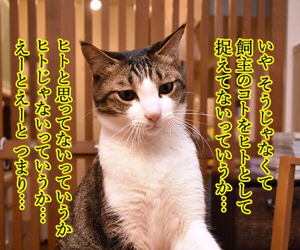 ネコは飼い主をネコと思っている? 猫の写真で4コマ漫画 3コマ目ッ