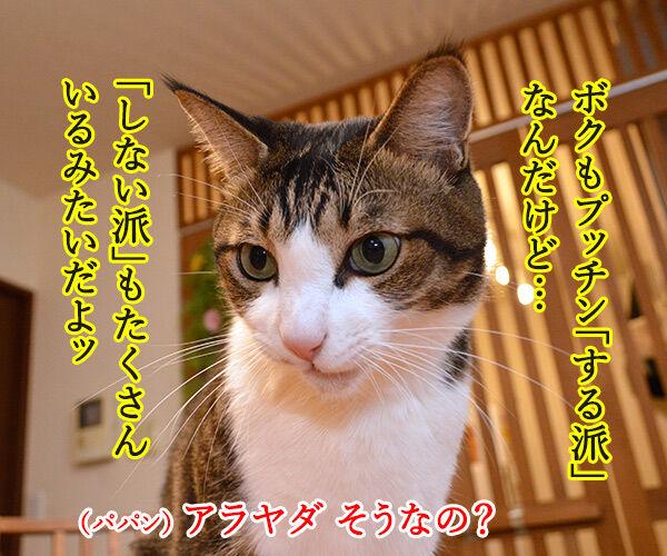プッチン「する派」「しない派」 あなたはどっち? 猫の写真で4コマ漫画 2コマ目ッ