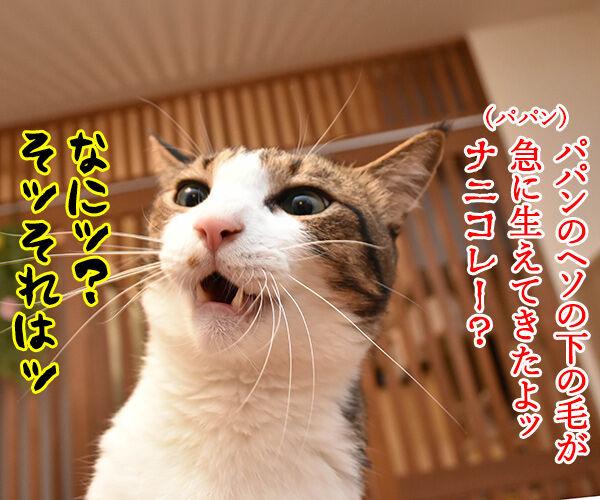 PETomorrowはオモローッ 猫の写真で4コマ漫画 3コマ目ッ