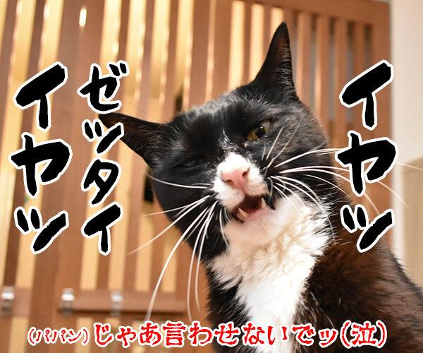 熱中症って言ってみてッ 猫の写真で4コマ漫画 4コマ目ッ