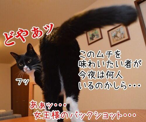 女王様の命令は絶対 猫の写真で4コマ漫画 3コマ目ッ