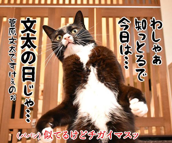 11月3日は文化の日なのよッ 猫の写真で4コマ漫画 2コマ目ッ