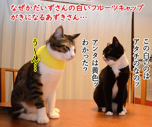 ラブストーリーは突然に 猫の写真で4コマ漫画 1コマ目ッ
