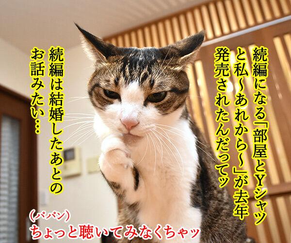 「部屋とYシャツと私」の続編が出てたのよッ 猫の写真で4コマ漫画 2コマ目ッ