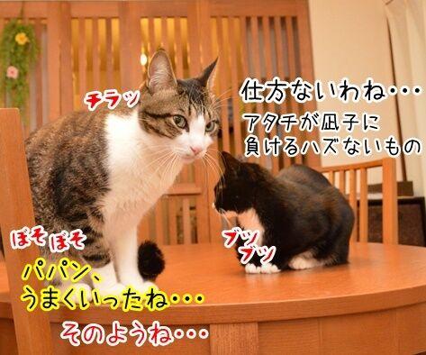 出来レース 猫の写真で4コマ漫画 3コマ目ッ