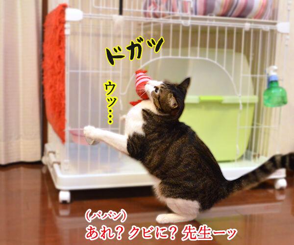 エビキャッチ 其の四 猫の写真で4コマ漫画 2コマ目ッ