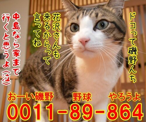 ヤメゴク~ヤクザやめて頂きます~ 猫の写真で4コマ漫画 4コマ目ッ