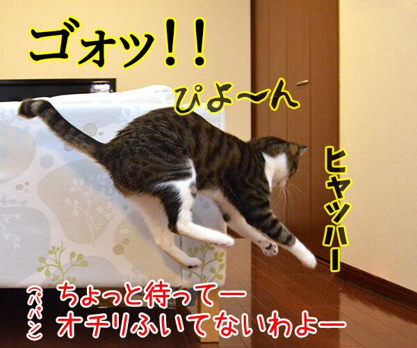 ウンチョスの後は… 猫の写真で4コマ漫画 2コマ目ッ