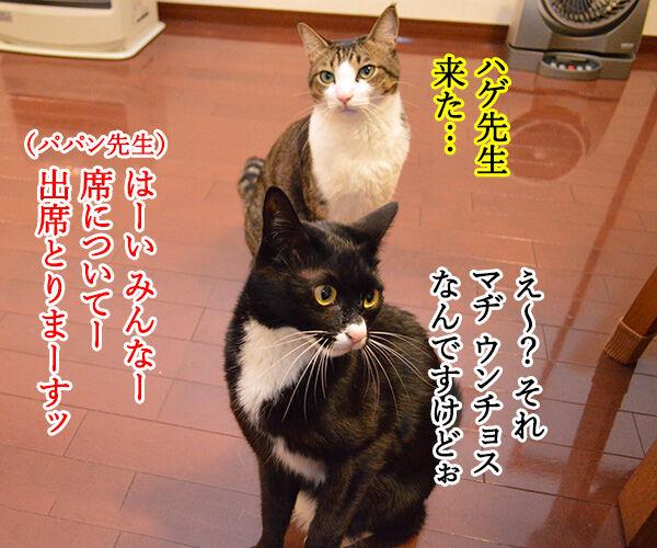 出席とりますッ 猫の写真で4コマ漫画 1コマ目ッ