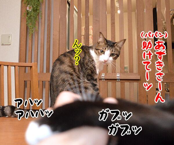 ガブリエル 其の一 猫の写真で4コマ漫画 3コマ目ッ
