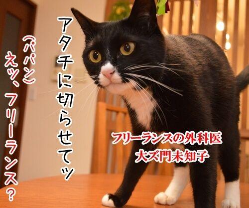 ドクターX 其の一 猫の写真で4コマ漫画 2コマ目ッ