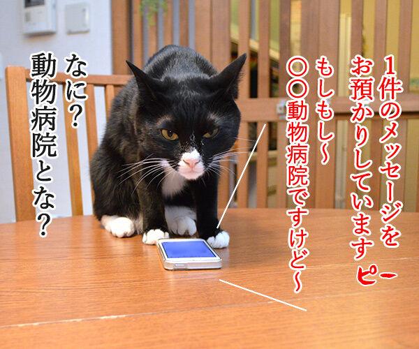 1件の新しいメッセージ 猫の写真で4コマ漫画 2コマ目ッ
