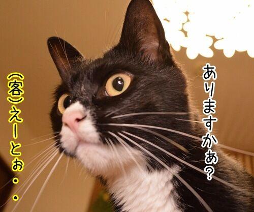 シャンプー 猫の写真で4コマ漫画 3コマ目ッ
