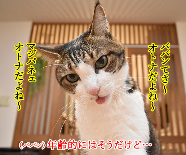 パパンみたいなオトナにはなりたくないの… 猫の写真で4コマ漫画 1コマ目ッ
