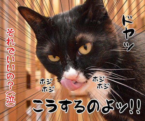 鼻をほじっちゃダメなのよッ 猫の写真で4コマ漫画 4コマ目ッ