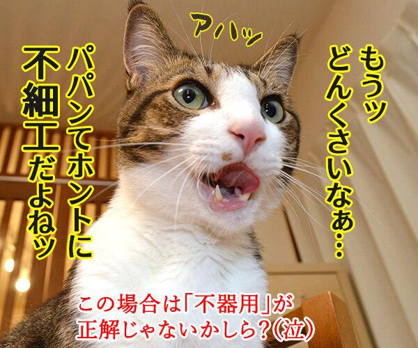 パパンてホントに…… 猫の写真で4コマ漫画 4コマ目ッ
