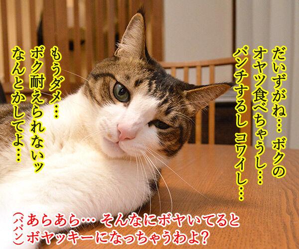 そんなにボヤいてると…… 猫の写真で4コマ漫画 2コマ目ッ