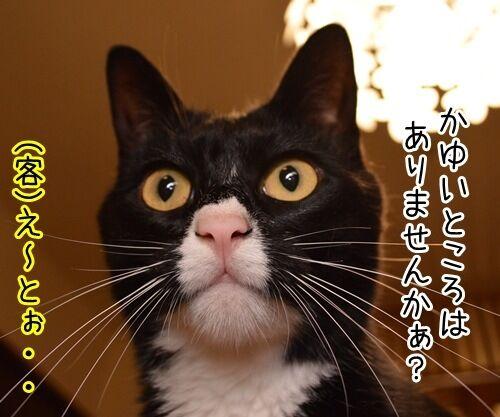 シャンプー 猫の写真で4コマ漫画 2コマ目ッ