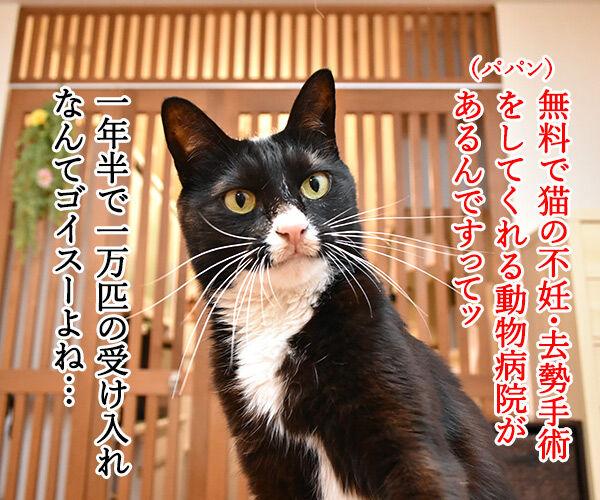 無料で猫の不妊・去勢手術をする動物病院があるんですってッ 猫の写真で4コマ漫画 1コマ目ッ