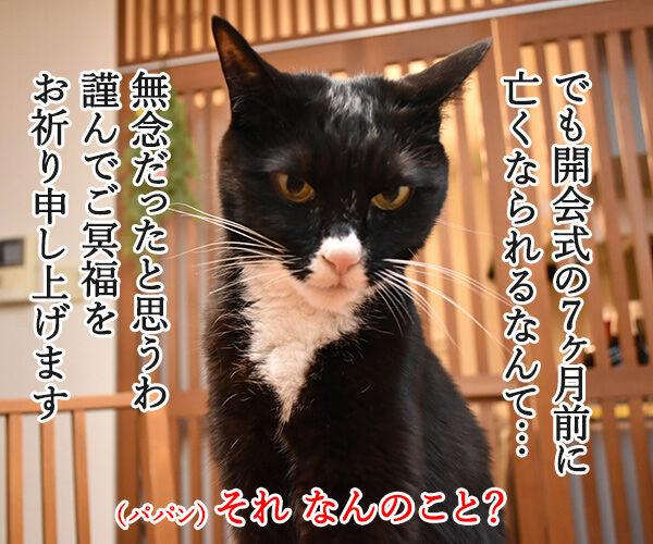 平昌オリンピックが始まったわねッ 猫の写真で4コマ漫画 3コマ目ッ