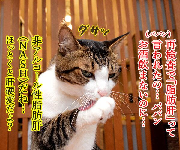 非アルコール性脂肪肝(NASH)になっちゃったの 猫の写真で4コマ漫画 1コマ目ッ