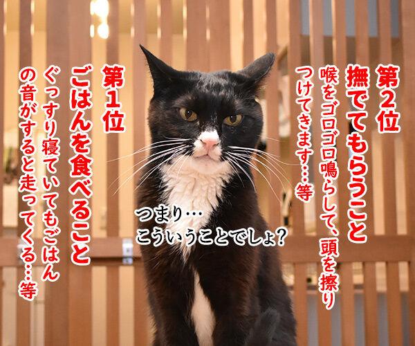 猫飼いさんが思う猫の毎日の生きがいランキングなのよッ 猫の写真で4コマ漫画 3コマ目ッ