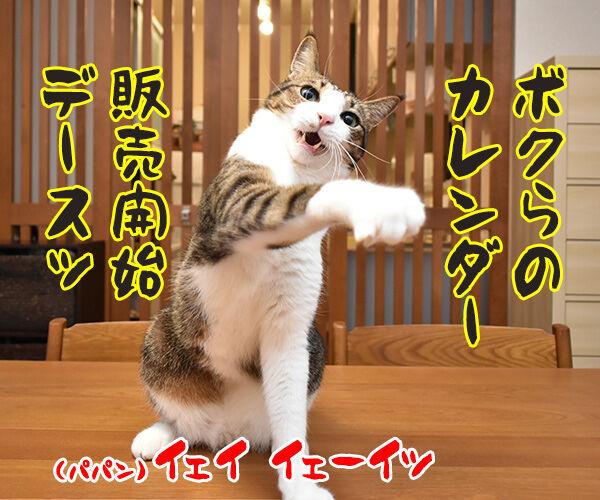 あずだいカレンダー 販売開始デースッ 猫の写真で4コマ漫画 1コマ目ッ