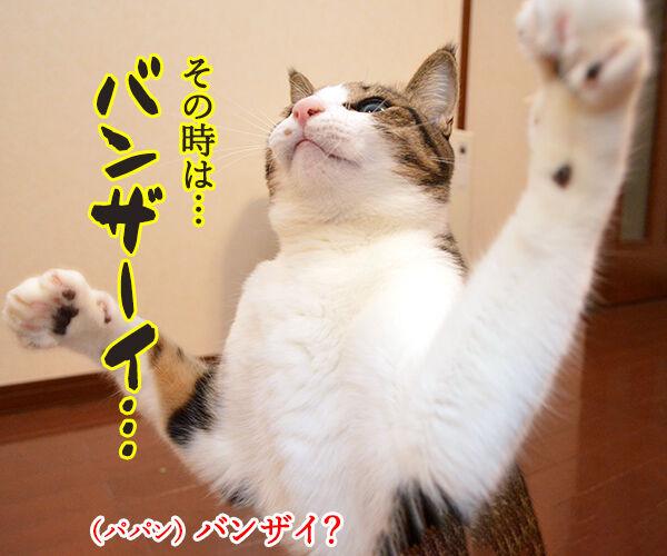 バンザーイッ 受験生のみんな 合格おめでとーッ 猫の写真で4コマ漫画 3コマ目ッ