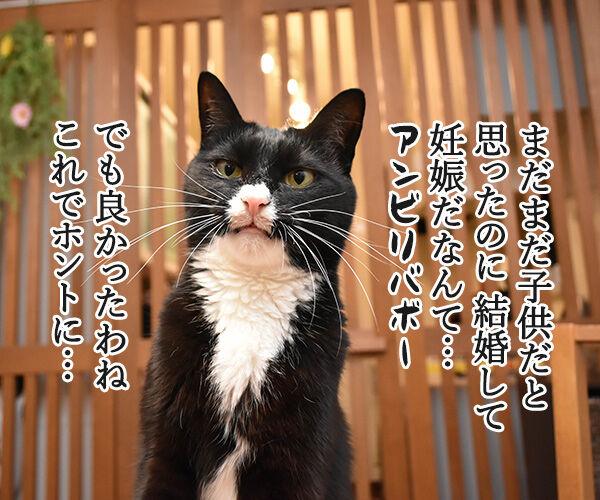 ぺこが妊娠でオメデトゴザマースッ 猫の写真で4コマ漫画 3コマ目ッ