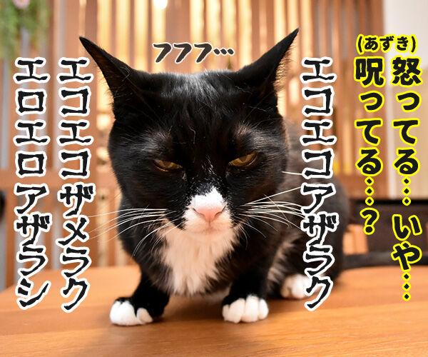 ケンカしちゃった 猫の写真で4コマ漫画 4コマ目ッ