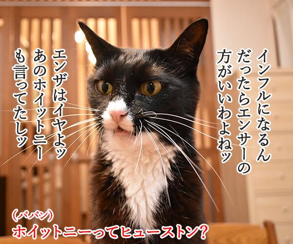 インフルエンザが流行ってるみたいなのッ 猫の写真で4コマ漫画 3コマ目ッ