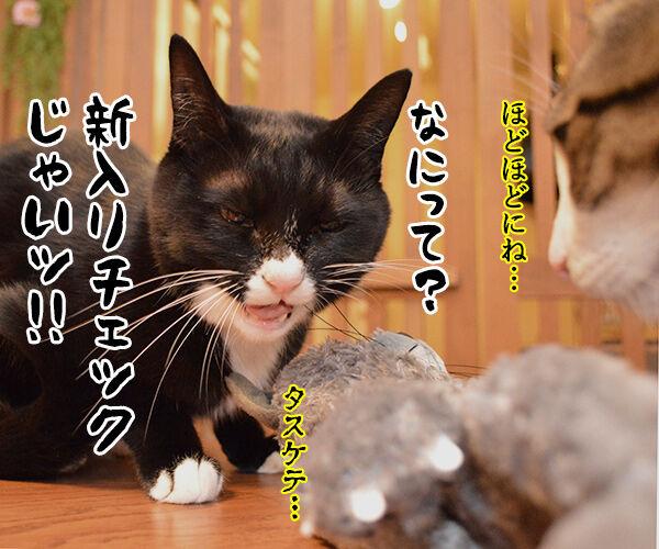 おともだちを紹介するよッ 猫の写真で4コマ漫画 4コマ目ッ