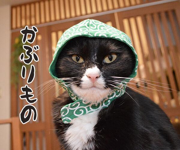 今までにした『かぶりもの』を集めてみたよッ 猫の写真で4コマ漫画 4コマ目ッ