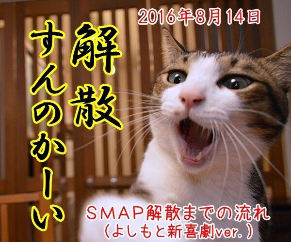 ドリルすんのかいせんのかい 猫の写真で4コマ漫画 4コマ目ッ