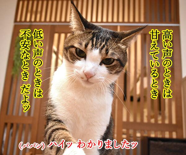 猫さんがアピールするときの鳴き方は? 猫の写真で4コマ漫画 2コマ目ッ