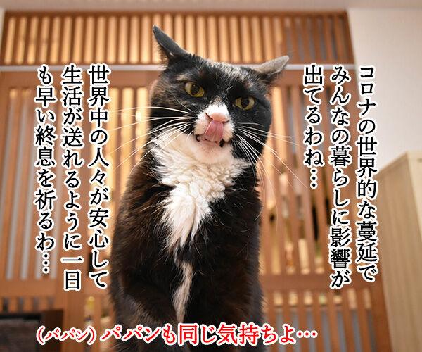 安心して生活できるように一日も早い終息を祈るわッ 猫の写真で4コマ漫画 1コマ目ッ