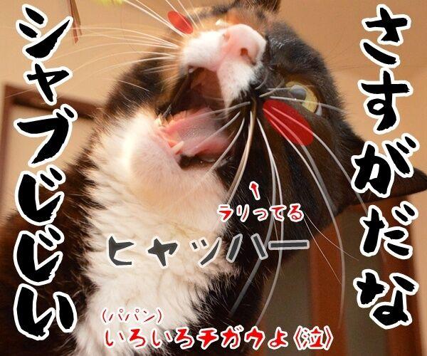 ダメじゃない、ゼッタイ 猫の写真で4コマ漫画 4コマ目ッ