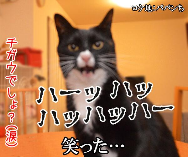 秋桜(コスモス) 猫の写真で4コマ漫画 4コマ目ッ