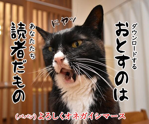LINEスタンプの第二弾が販売されたのよッ 猫の写真で4コマ漫画 4コマ目ッ